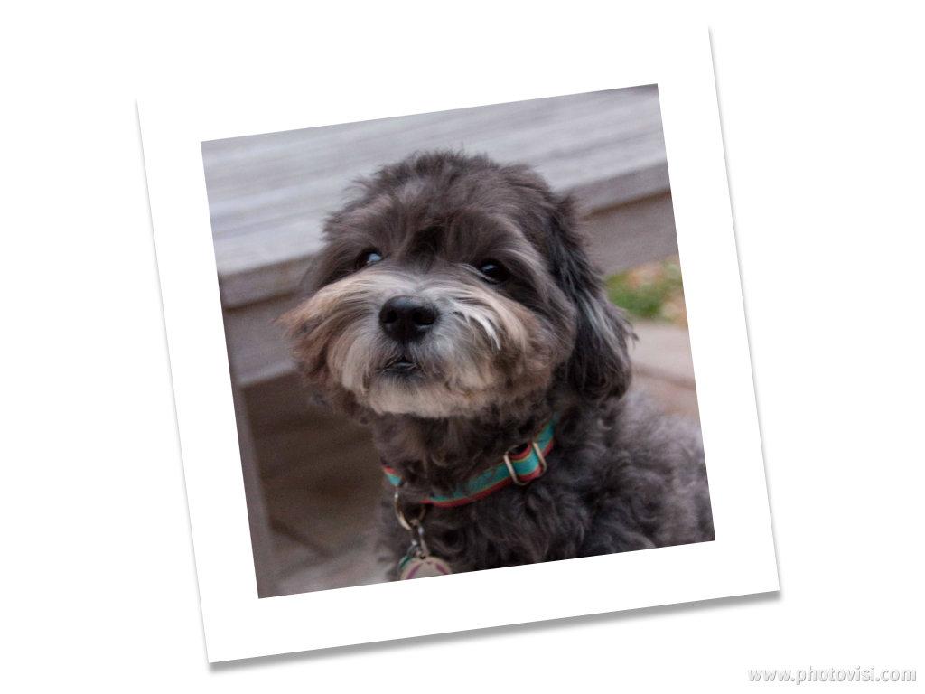 stephaniesdog.jpg