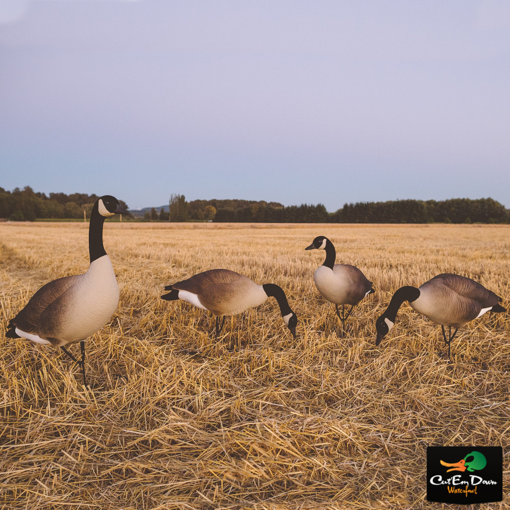Tanglefree Pro Series Weighted Keel Canada Goose' Decoys Flocked