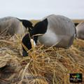 White Rock Canada Goose Full Body Blind Door Decoys