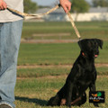 """AVERY OUTDOORS SPORTING DOG STANDARD LEASH - 44"""""""