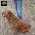 AVERY OUTDOORS SPORTING DOG TRAINER'S HEELING STICK