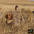 AVERY OUTDOORS GHG GROUND FORCE DOG BLIND