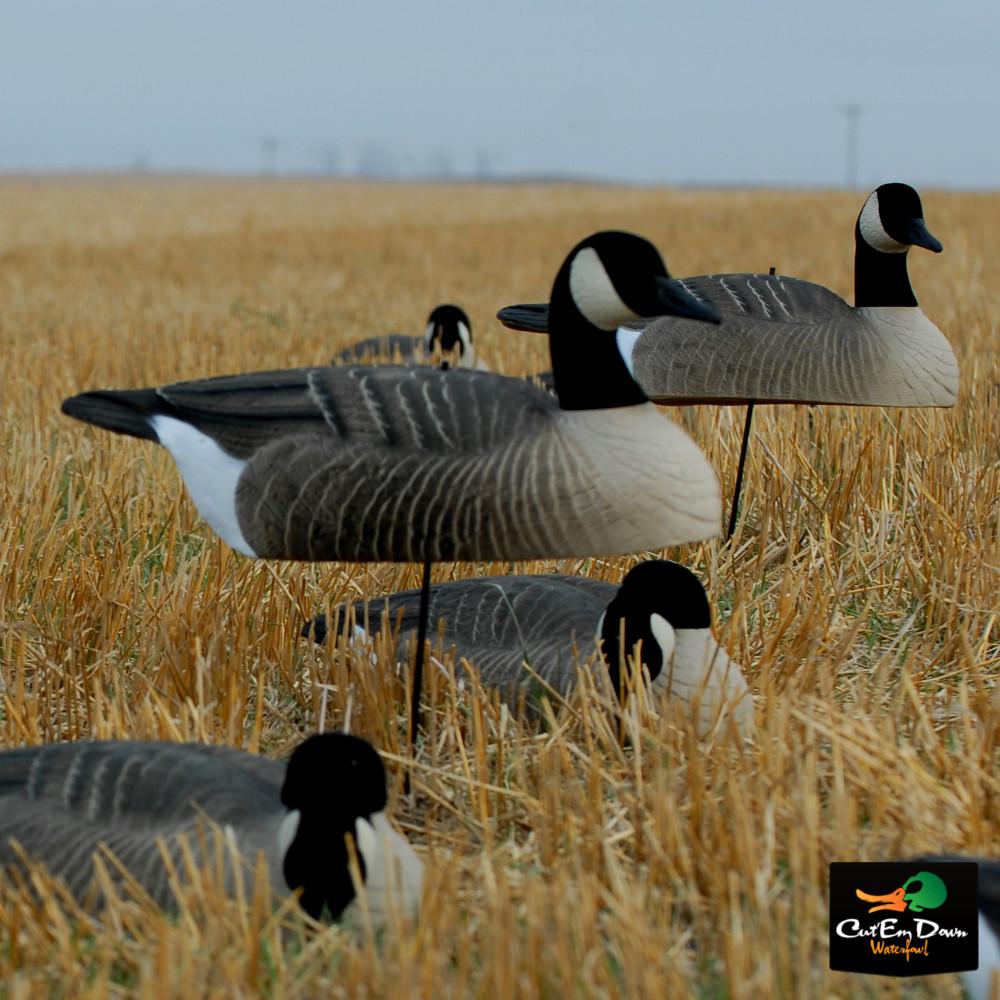 Canada Goose down sale shop - AVERY GREENHEAD GEAR GHG HOT BUY CANADA GOOSE SHELL DECOYS DOZEN ...