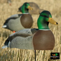 Over-Size Active Mallard Drake Shell
