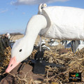 White Rock Gen 2 Snow Goose Blind Door Decoys