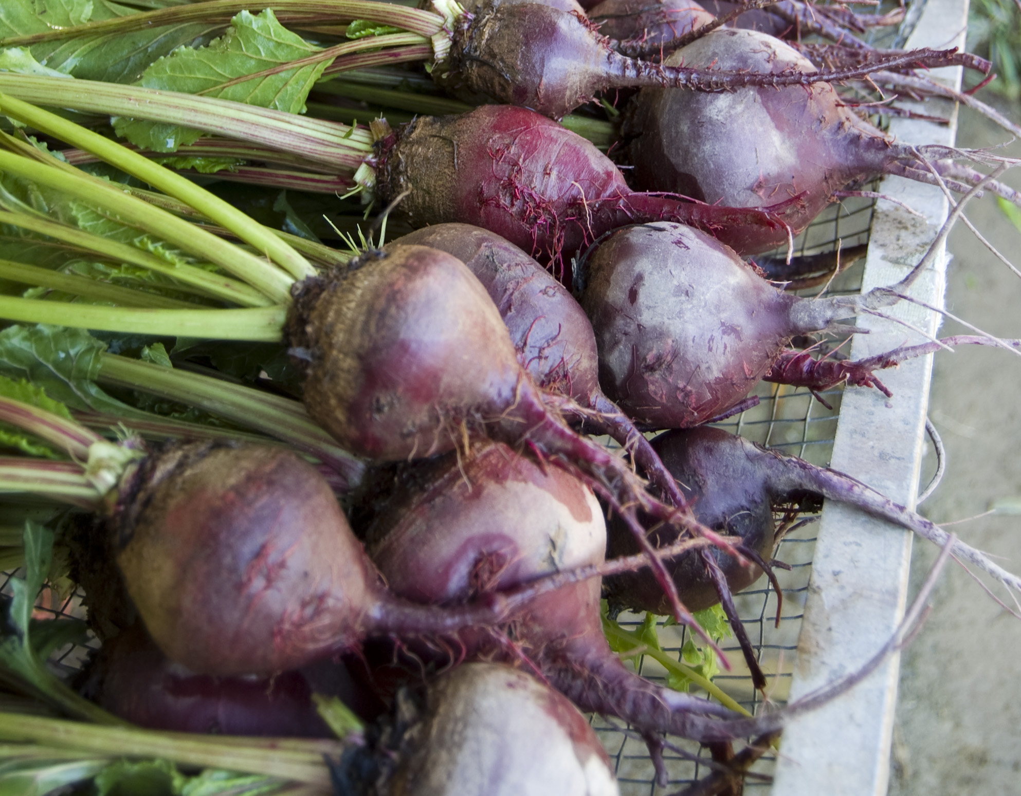 beets-crop.jpg