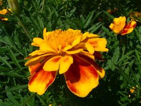 flower-for-web.jpg