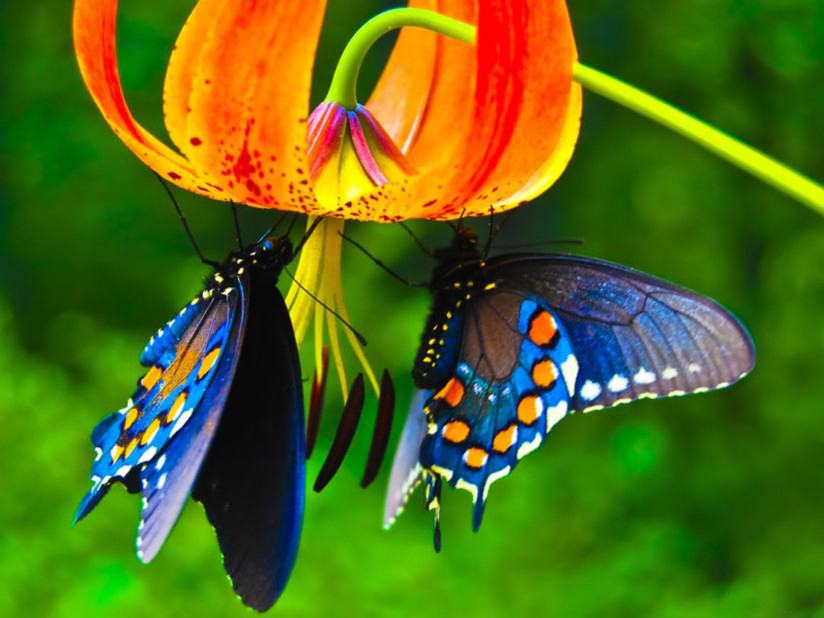 lily-and-butterfly.jpg