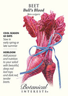 Beet Bull's Blood HEIRLOOM Seeds
