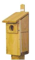 Stovall - Screech Owl/Kestrel House