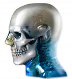 Atom Max Dental & Diagnostic Head Phantom