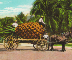 Pineapple Fruit Cart and Trees Wall Decor Art Print Poster (16x20)