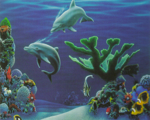 Tropical Fish Dolphins Coral Reef Underwater Ocean Animal Wall Decor Art Print Poster 16x20