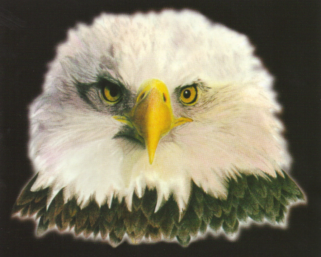 American Bald Eagle National Bird Motivational | Animal Posters ...