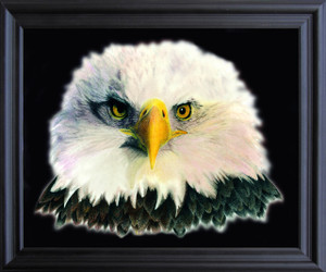 American Bald Eagle National Bird Motivational Wall Décor Black Framed Art Print Poster (19x23)
