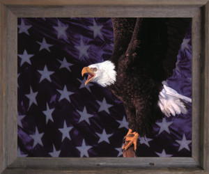 American Bald Eagle Flying Wall Decor Barnwood Framed Art Print Poster (19x23)