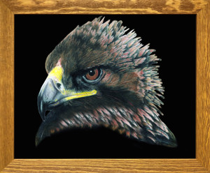 American Bald Eagle Bird Picture Wall Decor  Brown Rust Framed Art Print Poster (19x23)