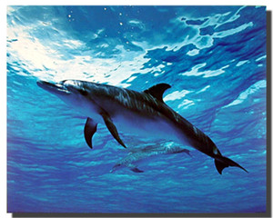 bottlenose dolphin posters