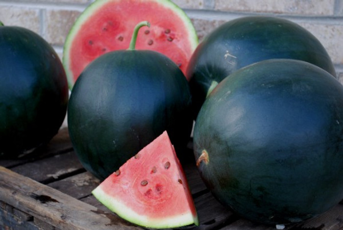 Watermelon - Blacktail Mountain OG