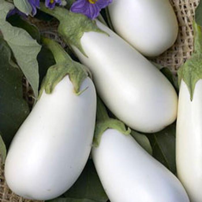 Eggplant - Snowy OG