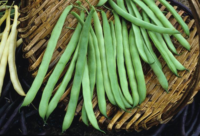 Beans - Kentucky Wonder (Pole) OG