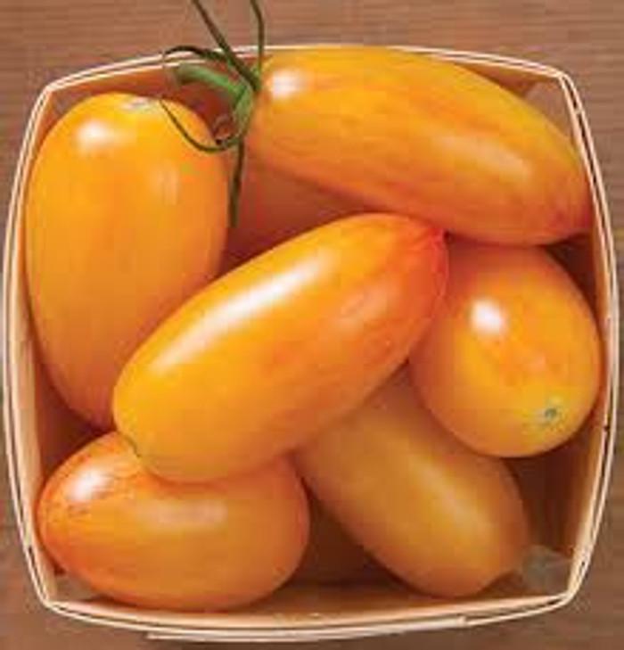 Tomato - Artisan Blush OG