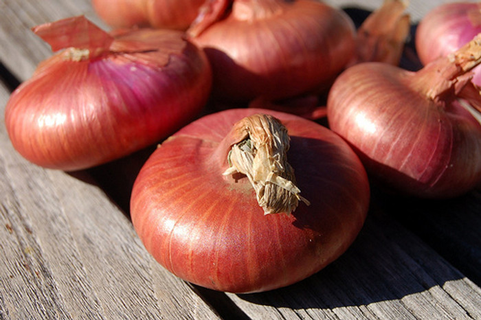 Onion - Red Cipollini OG