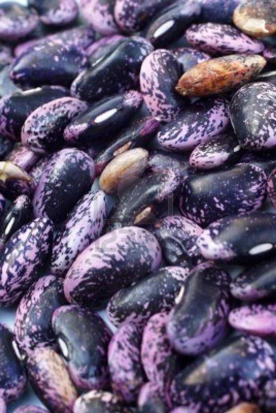 Beans - Scarlet Runner OG