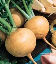 Turnip - Gold Ball OG