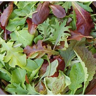Lettuce - Mild Mesclun Mix OG