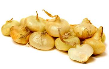 Onion - Yellow Cippolini OG