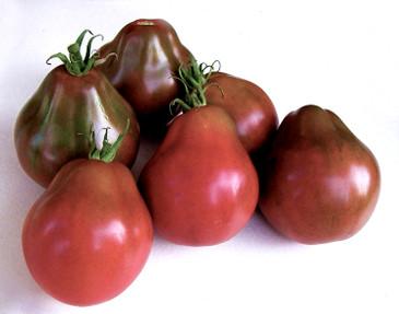 Tomato - Black Trifele OG