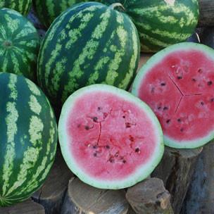 Watermelon - Sweet Dakota Rose OG