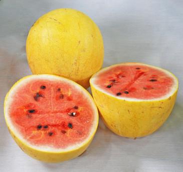 Watermelon - Golden Midget OG