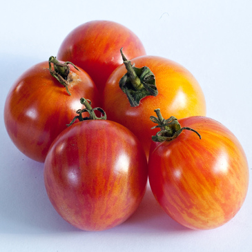 Tomato - Sunrise Bumble Bee OG