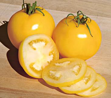 Tomato - Taxi Yellow Short OG