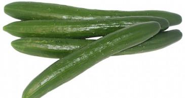 Cucumber - Shintokiwa OG/BD (long-fruited)
