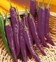 Pepper - Purple Cayenne OG