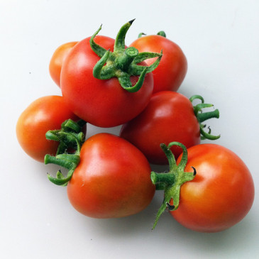 Organic Washington Cherry Tomatoes from the Seattle Seed gardens.