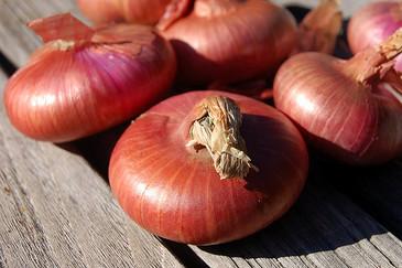 Onion - Red Cipollini OG