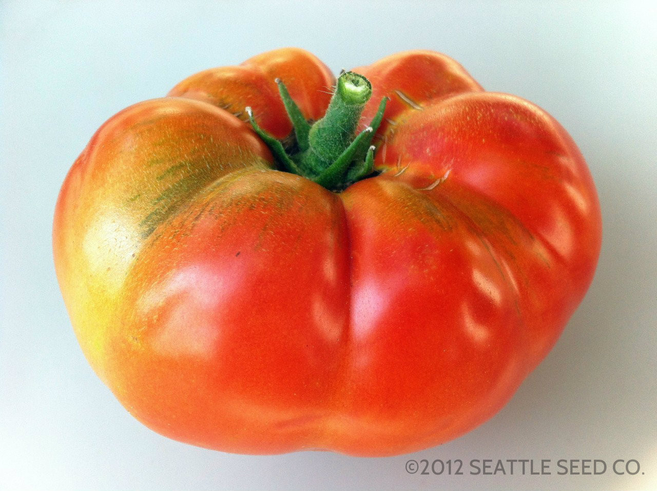 Tomato Garden Peach OG Seattle Seed Company