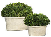 Uttermost Preserved Boxwood Set of Two