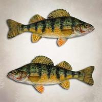 Yellow Perch Fishing Decal