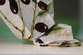 Olive DishTowel