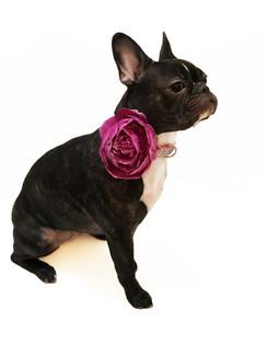 Lavender Dog Collar Flower