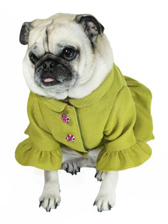 Ruffle Dog Coat