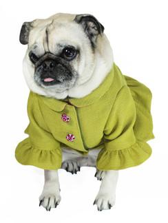 Ruffle Dog Coat