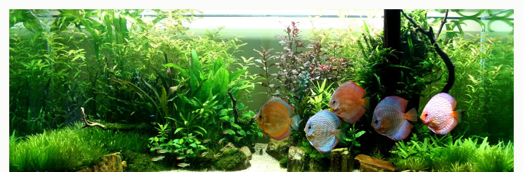 Aquarium maintenance sydney aquarium installation sydney for Fish ponds sydney