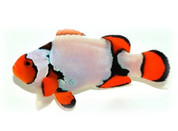 Platinum Percula Clownfish