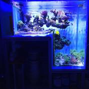 L-shaped/Step Aquariums 1200